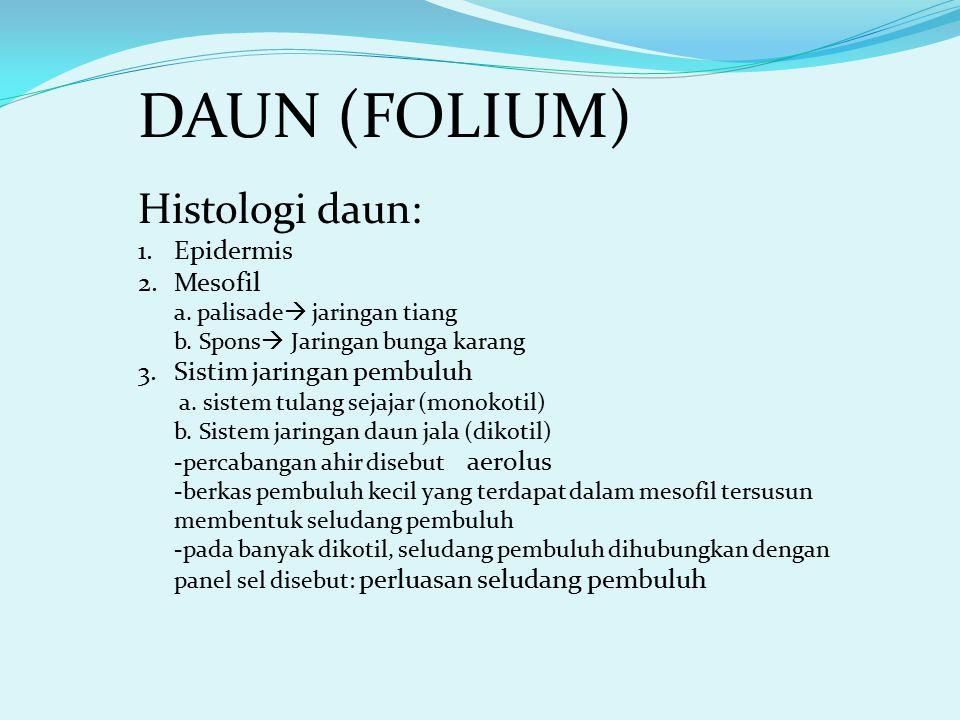 DAUN (FOLIUM) Histologi daun: Epidermis Mesofil