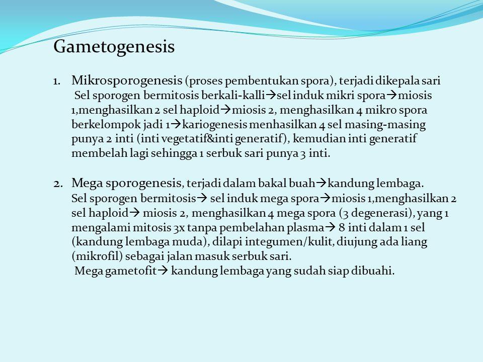 Gametogenesis Mikrosporogenesis (proses pembentukan spora), terjadi dikepala sari.