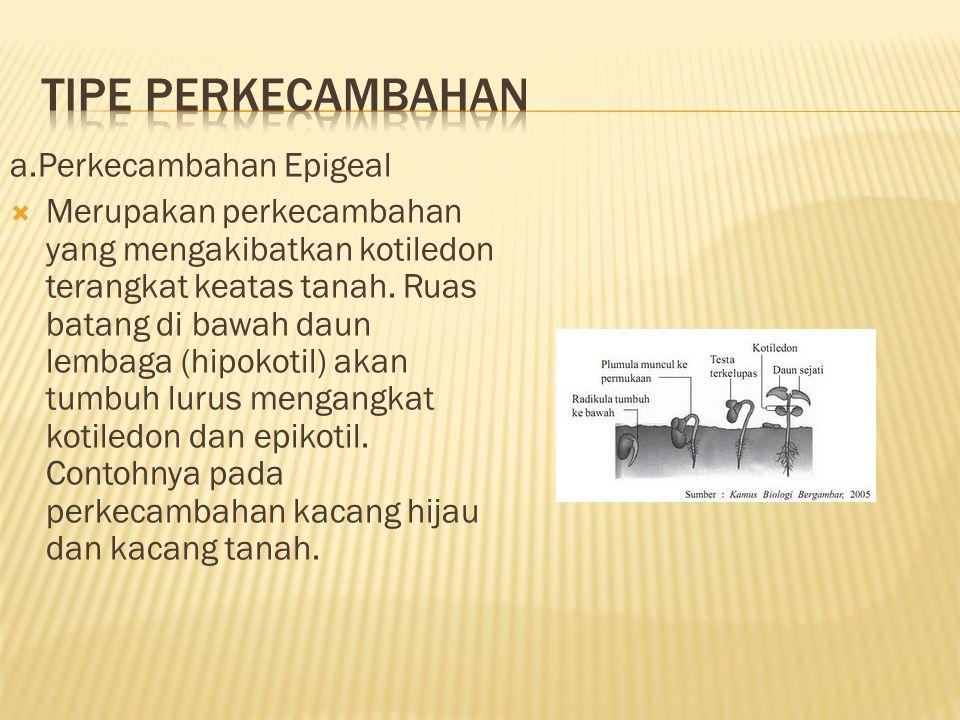 TIPE PERKECAMBAHAN a.Perkecambahan Epigeal