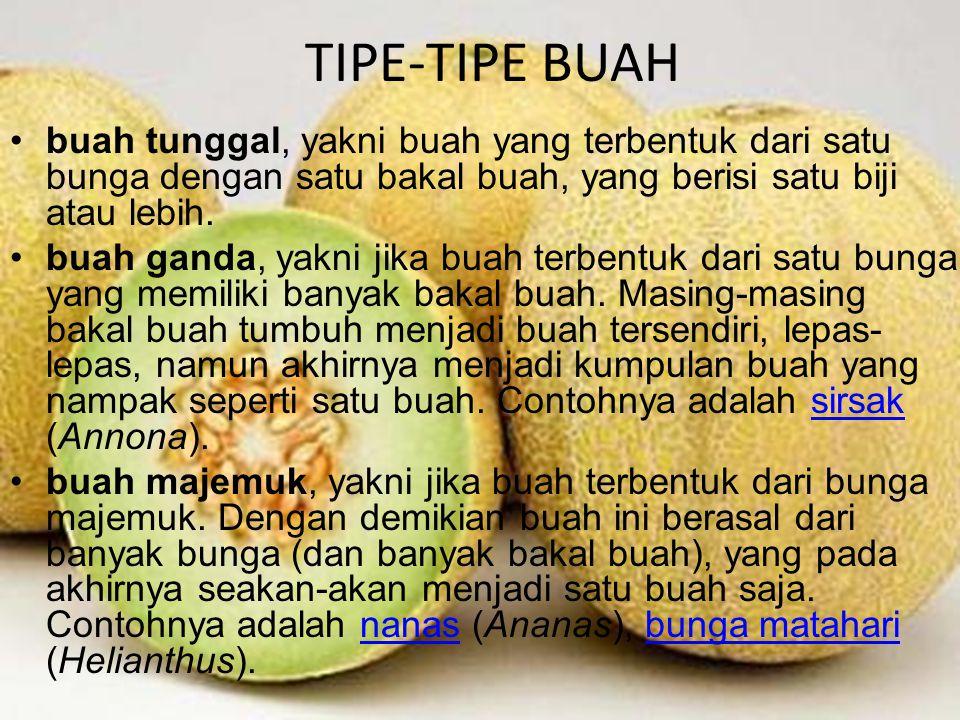 TIPE-TIPE BUAH TIPE-TIPE BUAH
