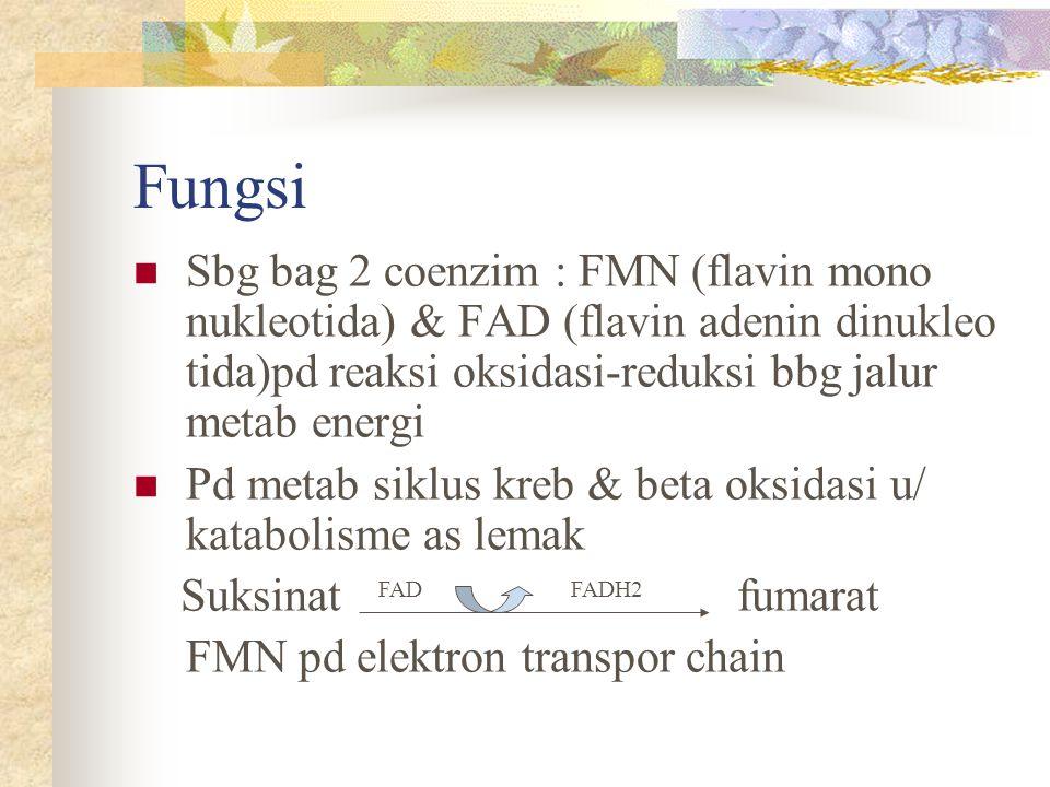 Fungsi Sbg bag 2 coenzim : FMN (flavin mono nukleotida) & FAD (flavin adenin dinukleo tida)pd reaksi oksidasi-reduksi bbg jalur metab energi.