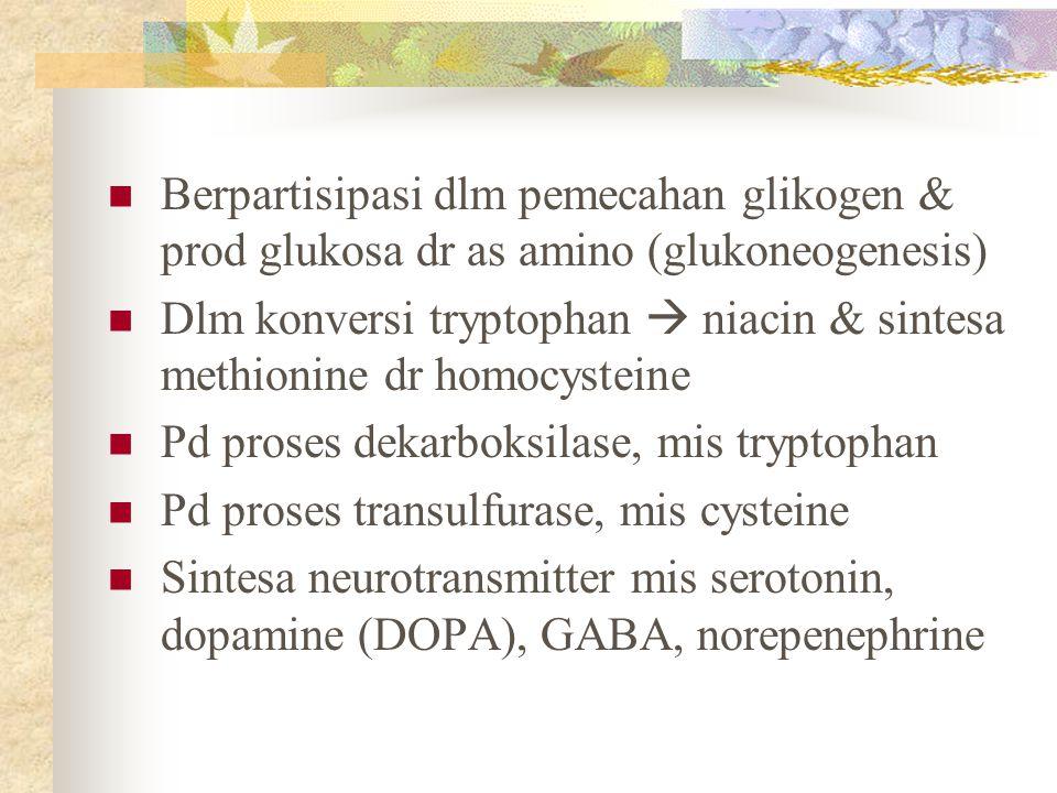 Berpartisipasi dlm pemecahan glikogen & prod glukosa dr as amino (glukoneogenesis)