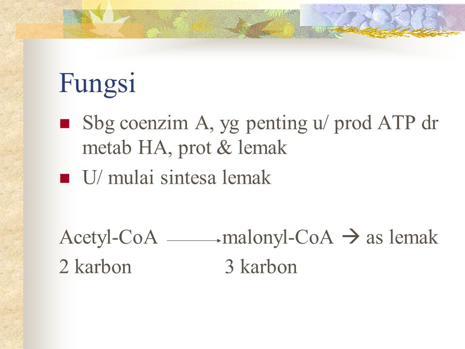 Fungsi Sbg coenzim A, yg penting u/ prod ATP dr metab HA, prot & lemak