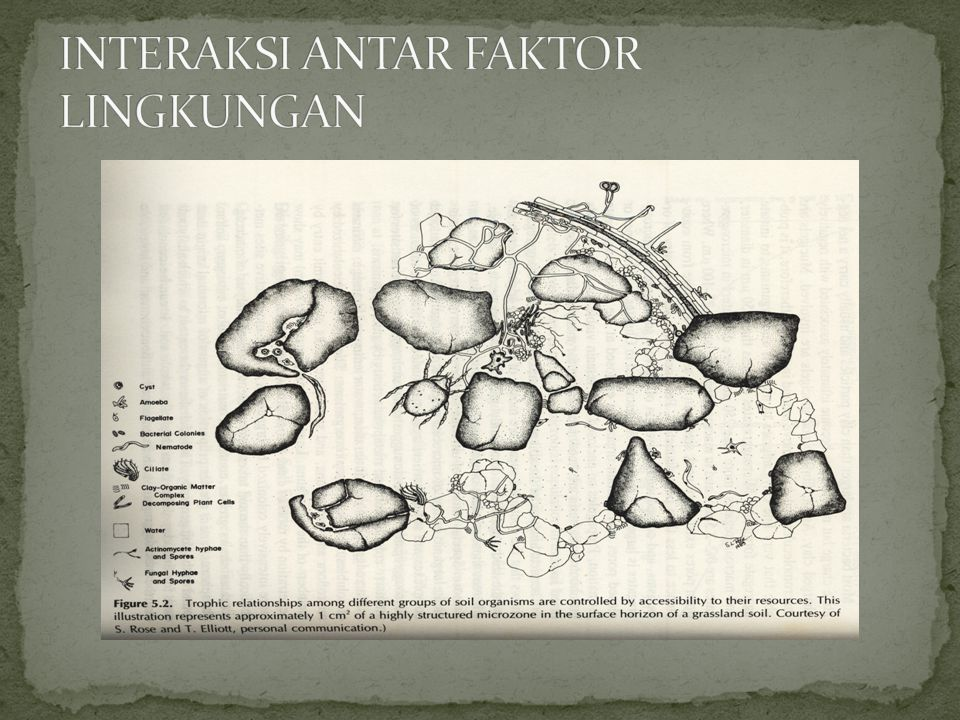 INTERAKSI ANTAR FAKTOR LINGKUNGAN
