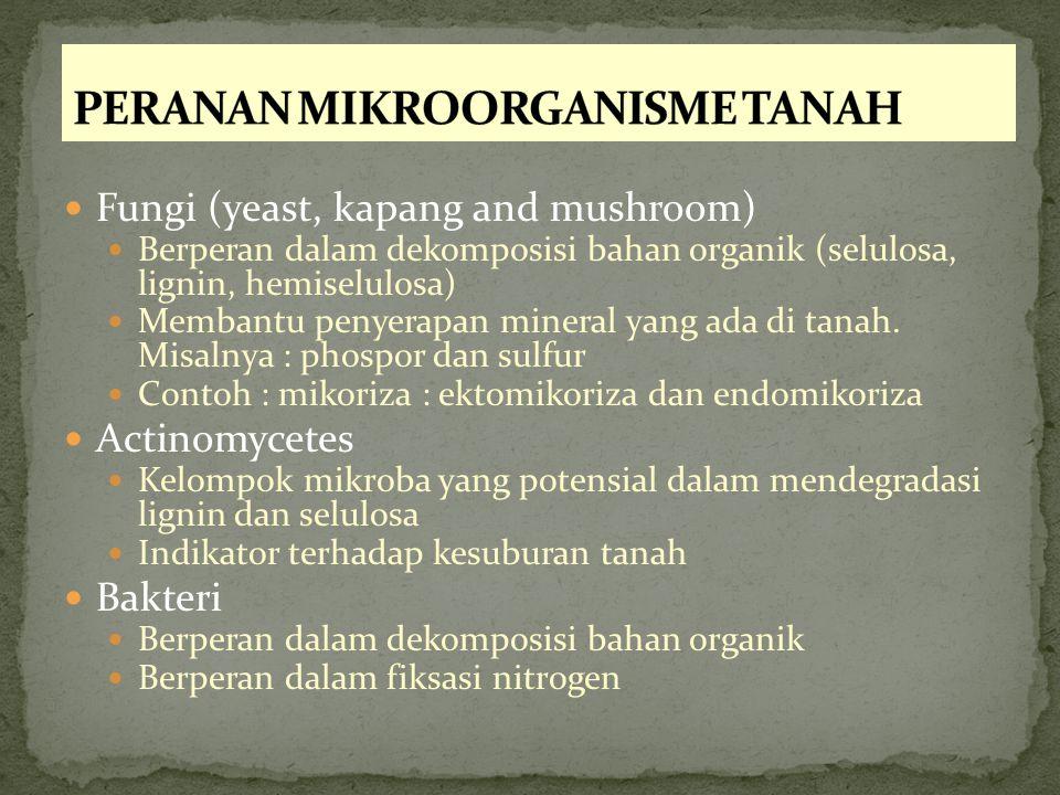 PERANAN MIKROORGANISME TANAH