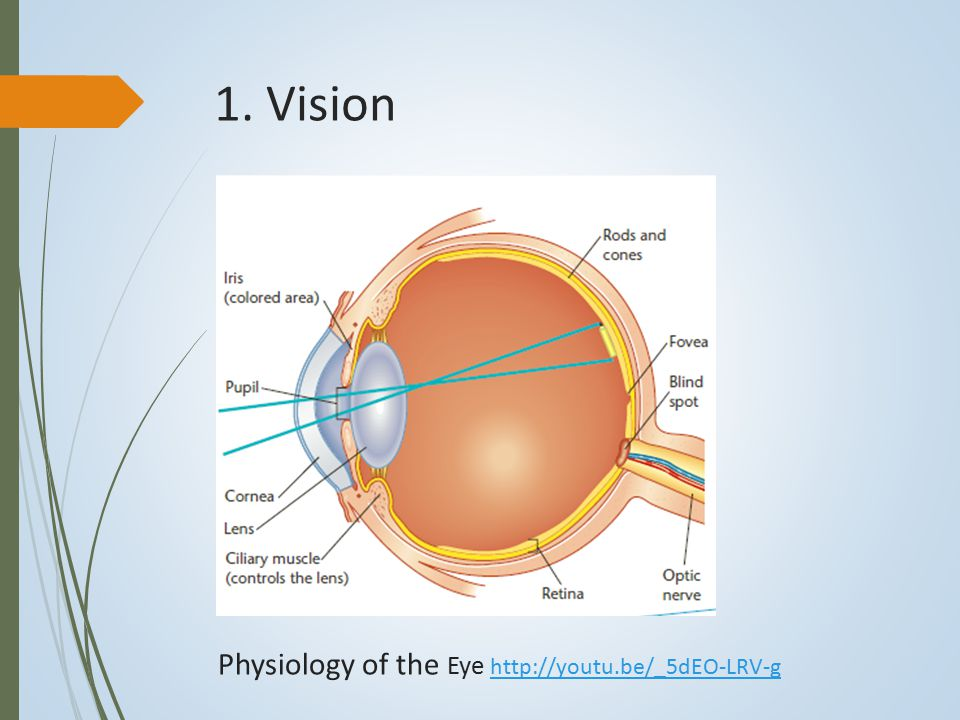 1. Vision Physiology of the Eye http://youtu.be/_5dEO-LRV-g