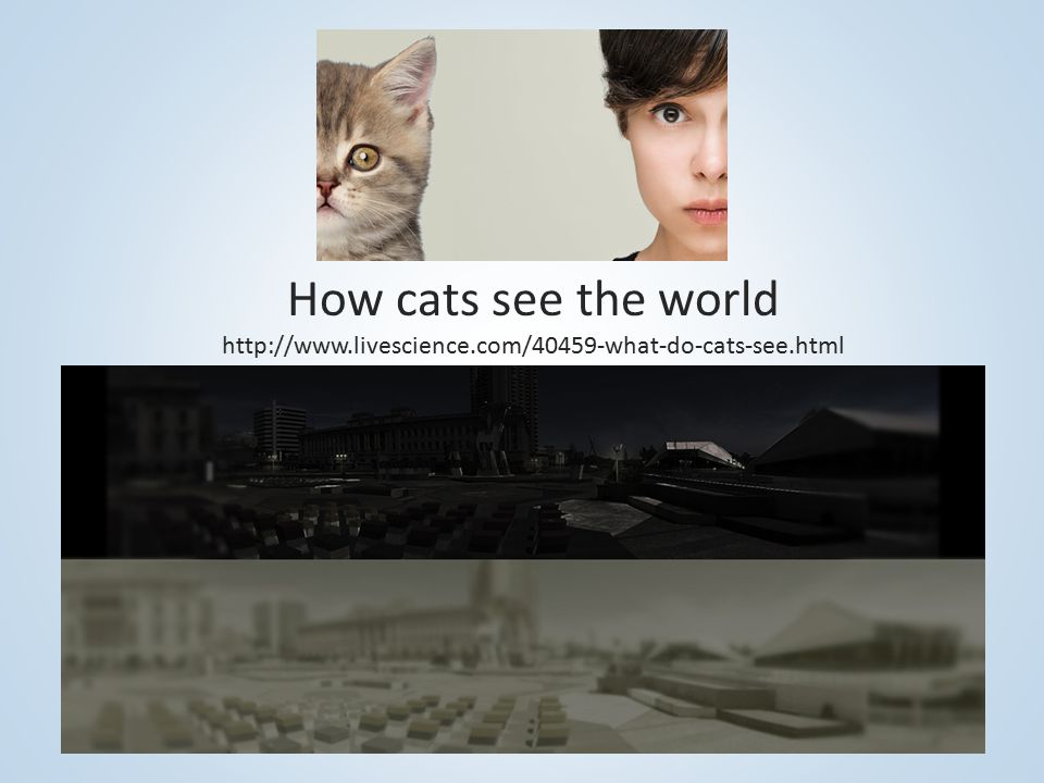 How cats see the world http://www. livescience