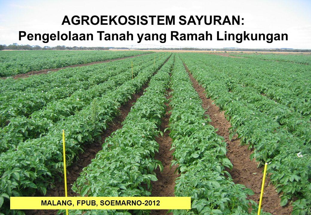 AGROEKOSISTEM SAYURAN: Pengelolaan Tanah yang Ramah Lingkungan