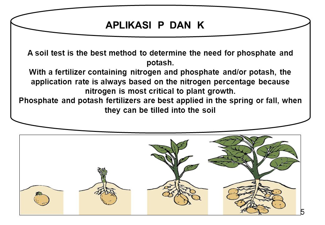 A soil test is the best method to determine the need for phosphate and potash.