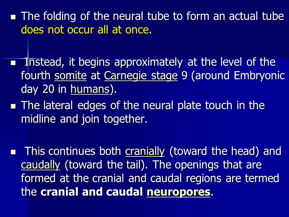 The folding of the neural tube to form an actual tube does not occur all at once.