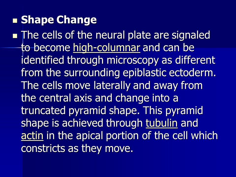 Shape Change