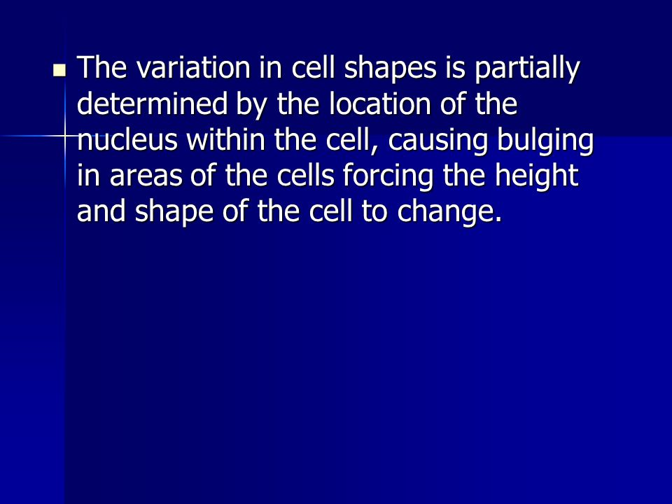 The variation in cell shapes is partially determined by the location of the nucleus within the cell, causing bulging in areas of the cells forcing the height and shape of the cell to change.
