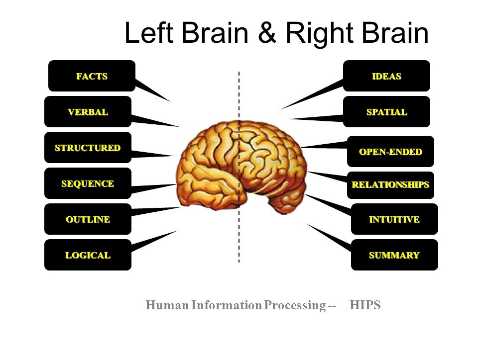 Left Brain & Right Brain