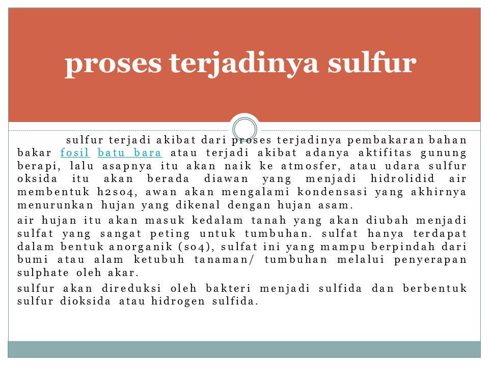 proses terjadinya sulfur