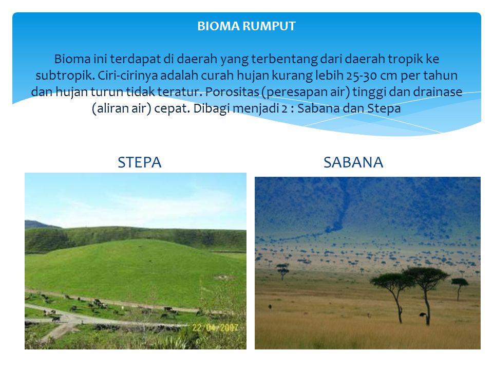 BIOMA RUMPUT Bioma ini terdapat di daerah yang terbentang dari daerah tropik ke subtropik. Ciri-cirinya adalah curah hujan kurang lebih 25-30 cm per tahun dan hujan turun tidak teratur. Porositas (peresapan air) tinggi dan drainase (aliran air) cepat. Dibagi menjadi 2 : Sabana dan Stepa
