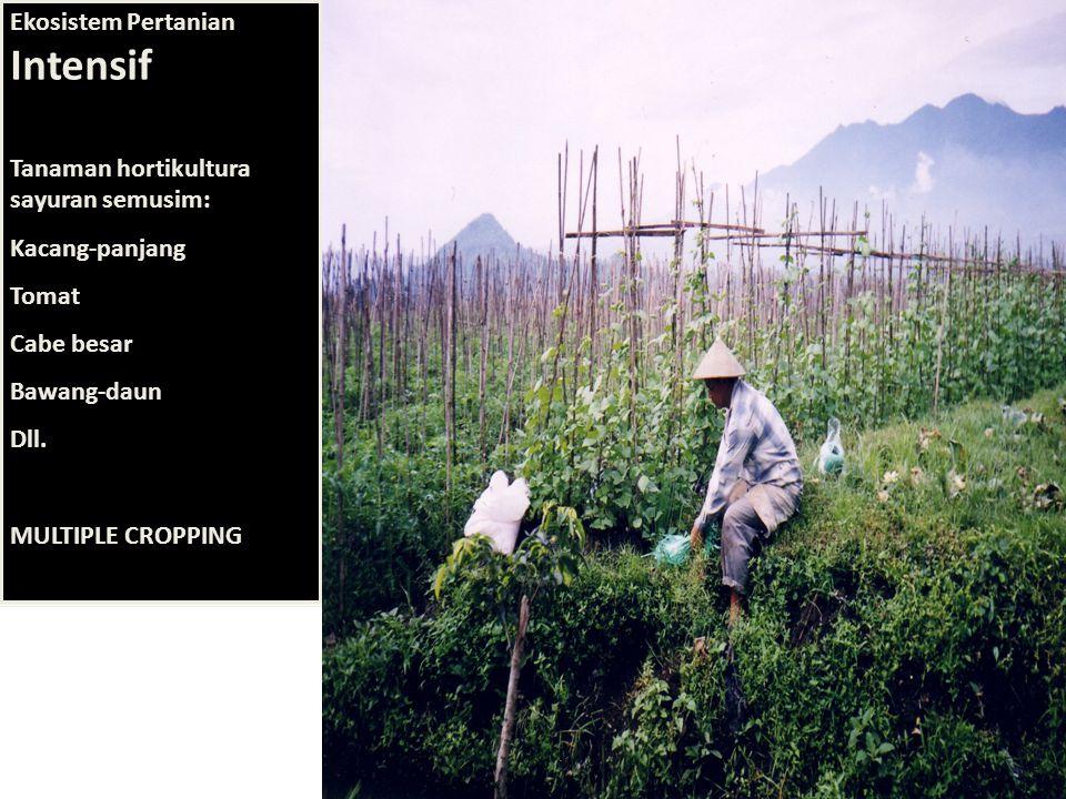 Ekosistem Pertanian Intensif