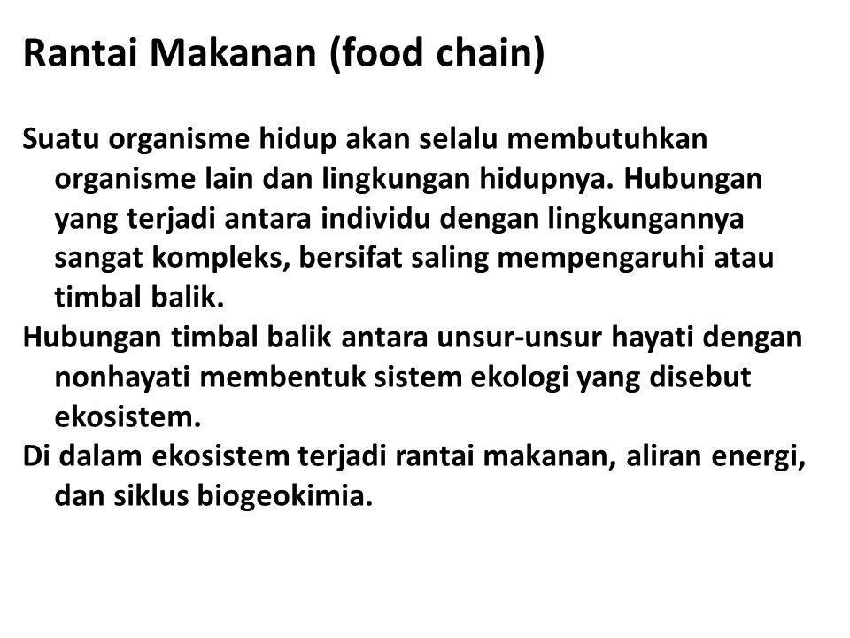Rantai Makanan (food chain)