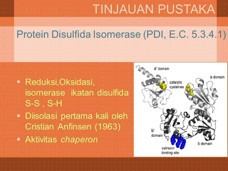 Protein Disulfida Isomerase (PDI, E.C. 5.3.4.1)