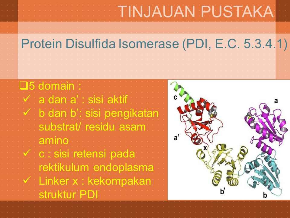 TINJAUAN PUSTAKA Protein Disulfida Isomerase (PDI, E.C. 5.3.4.1)