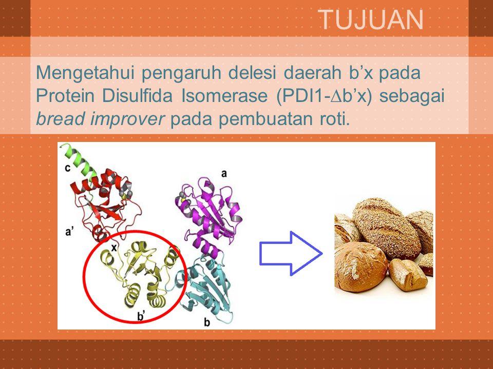 TUJUAN Mengetahui pengaruh delesi daerah b'x pada Protein Disulfida Isomerase (PDI1-∆b'x) sebagai bread improver pada pembuatan roti.
