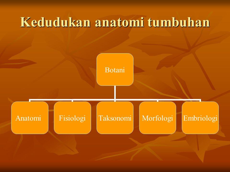 Kedudukan anatomi tumbuhan