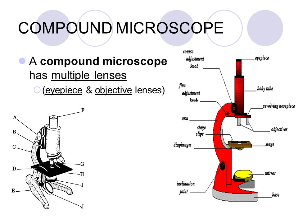 COMPOUND MICROSCOPE A compound microscope has multiple lenses