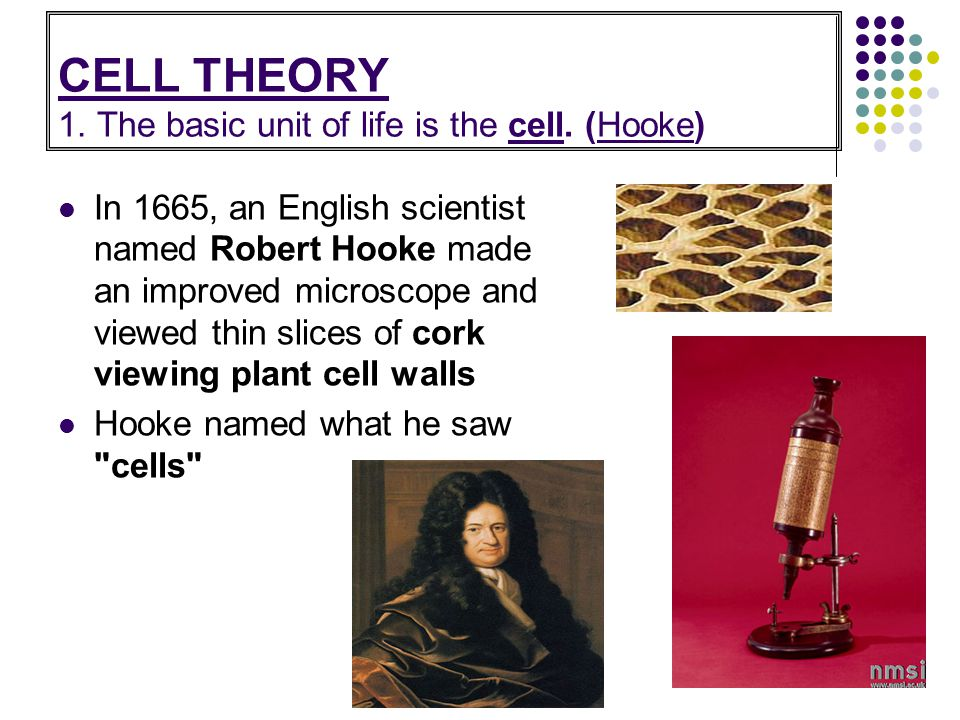 CELL THEORY 1. The basic unit of life is the cell. (Hooke)