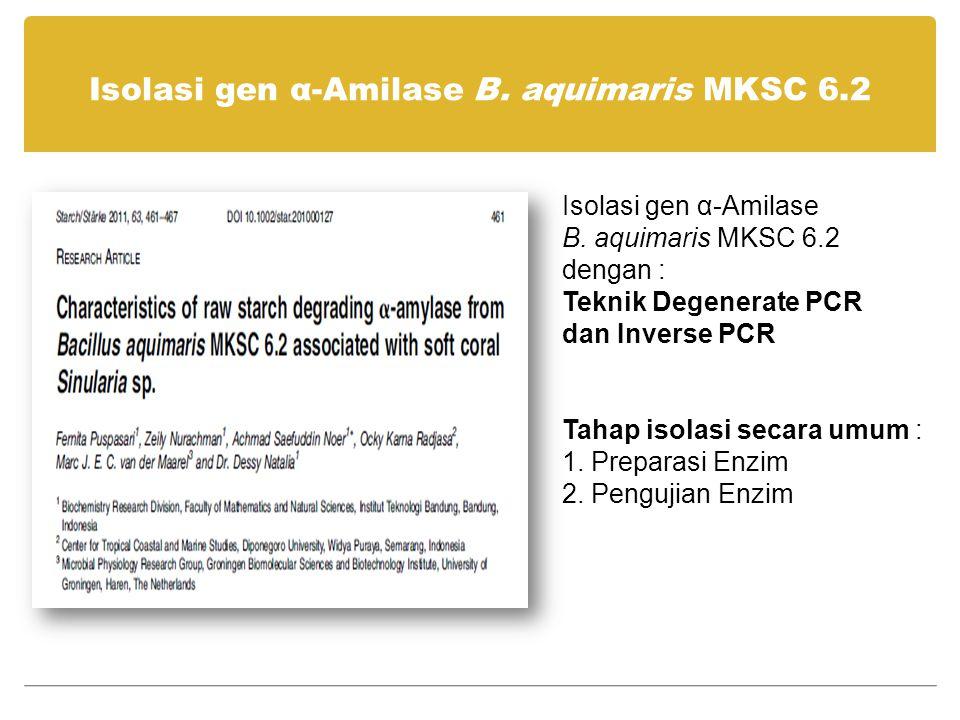 Isolasi gen α-Amilase B. aquimaris MKSC 6.2
