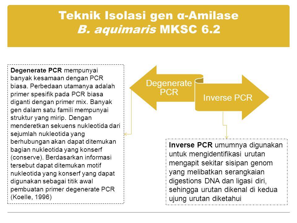Teknik Isolasi gen α-Amilase B. aquimaris MKSC 6.2