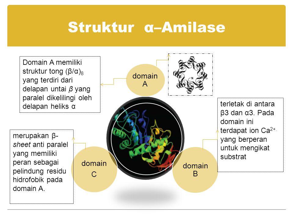 Struktur α–Amilase domain A. domain B. domain. C.