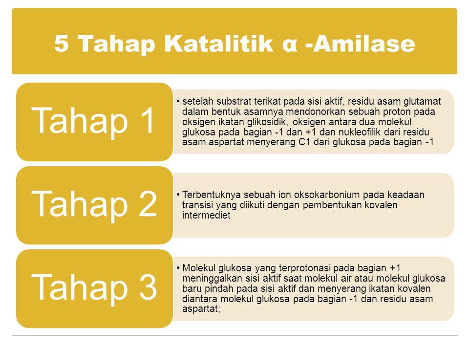 5 Tahap Katalitik α -Amilase