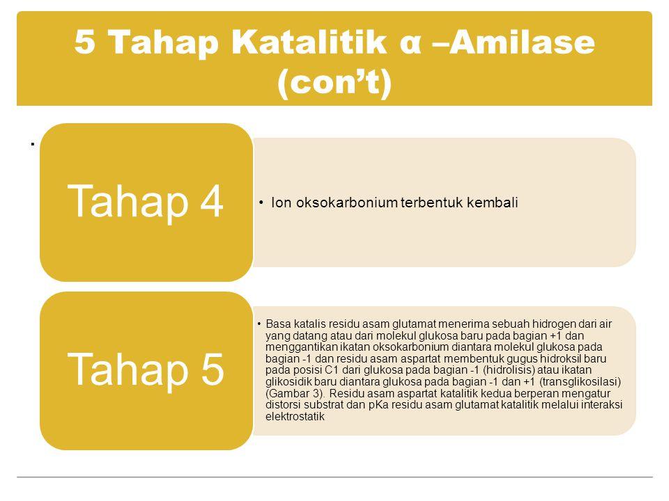 5 Tahap Katalitik α –Amilase (con't)