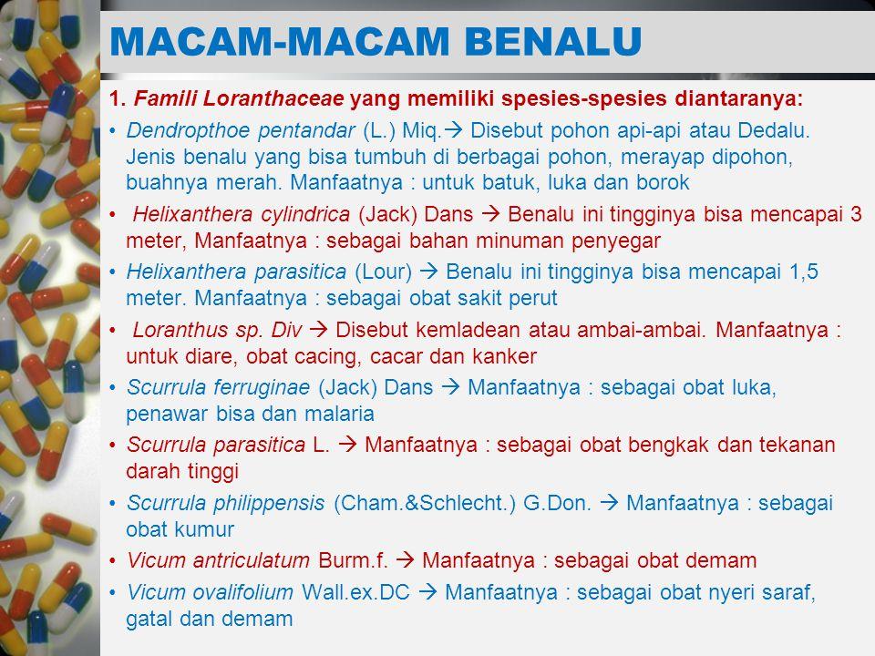 MACAM-MACAM BENALU 1. Famili Loranthaceae yang memiliki spesies-spesies diantaranya:
