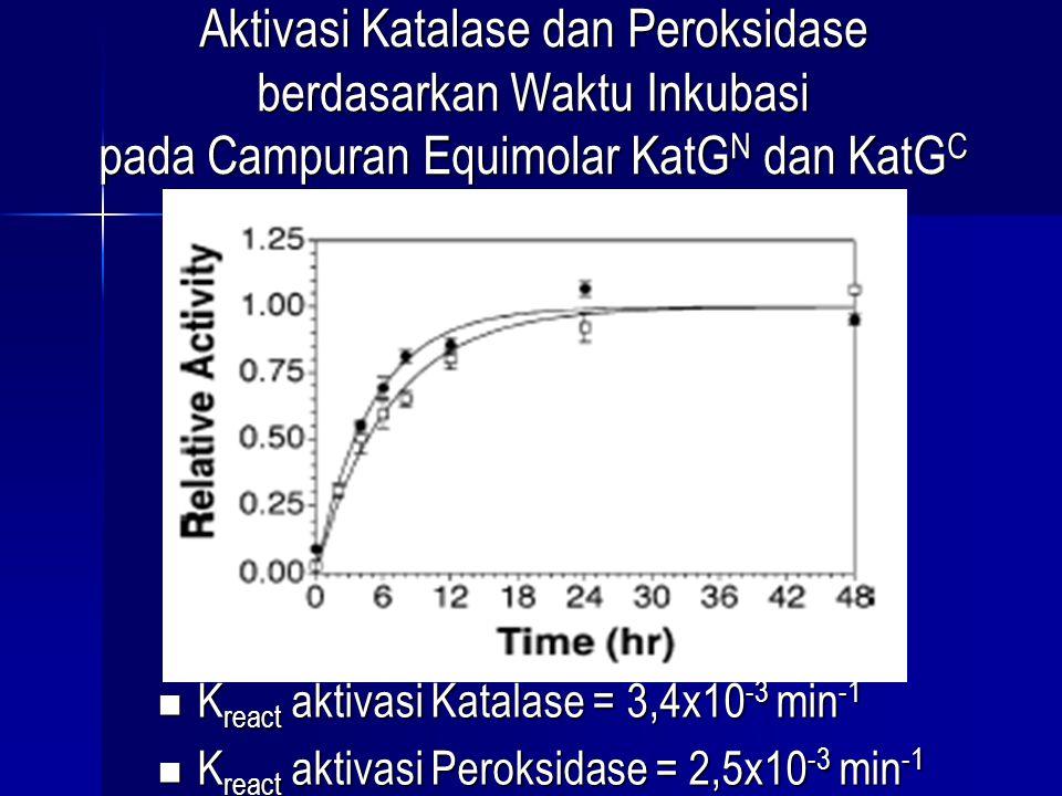 Aktivasi Katalase dan Peroksidase berdasarkan Waktu Inkubasi pada Campuran Equimolar KatGN dan KatGC