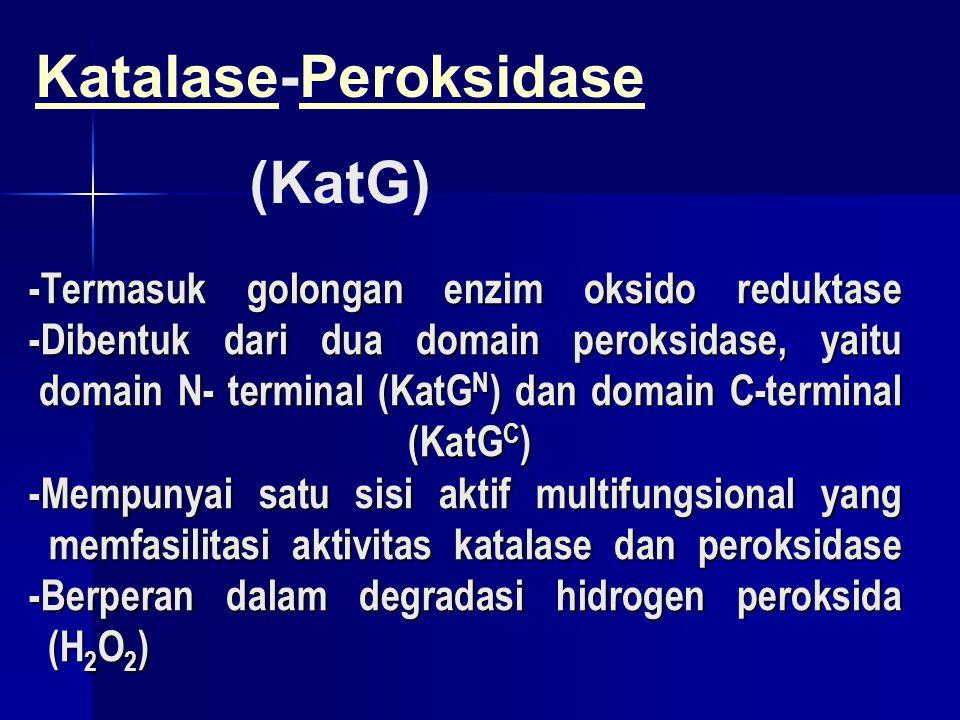 Katalase-Peroksidase