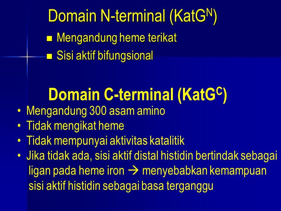 Domain N-terminal (KatGN)