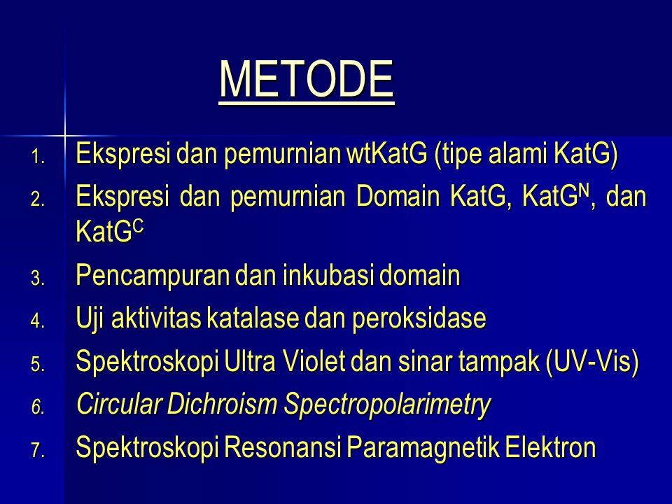 METODE Ekspresi dan pemurnian wtKatG (tipe alami KatG)