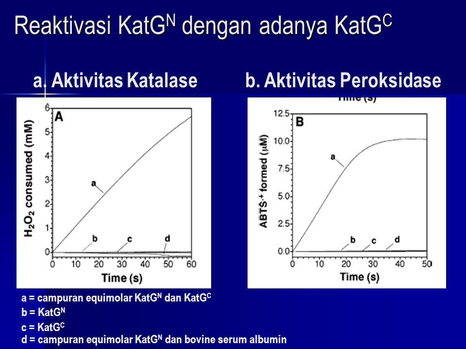 Reaktivasi KatGN dengan adanya KatGC