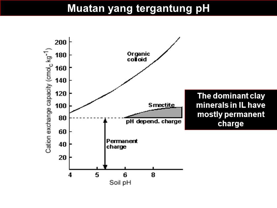 Muatan yang tergantung pH