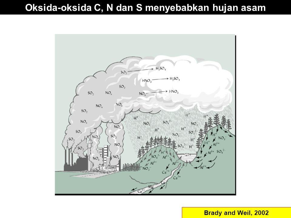 Oksida-oksida C, N dan S menyebabkan hujan asam