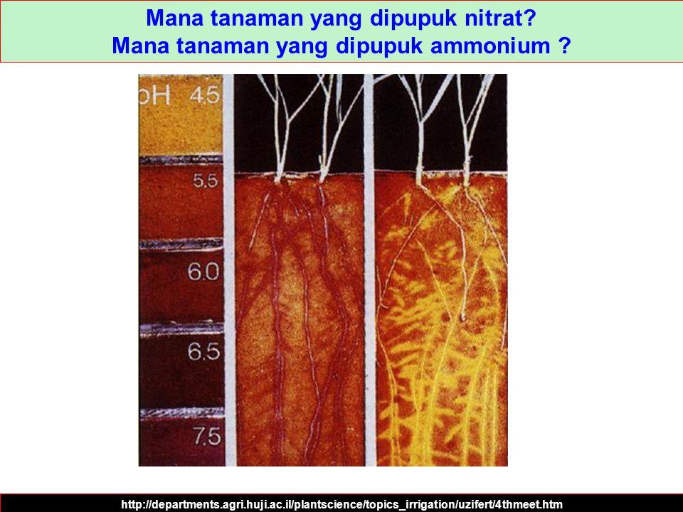 Mana tanaman yang dipupuk nitrat Mana tanaman yang dipupuk ammonium