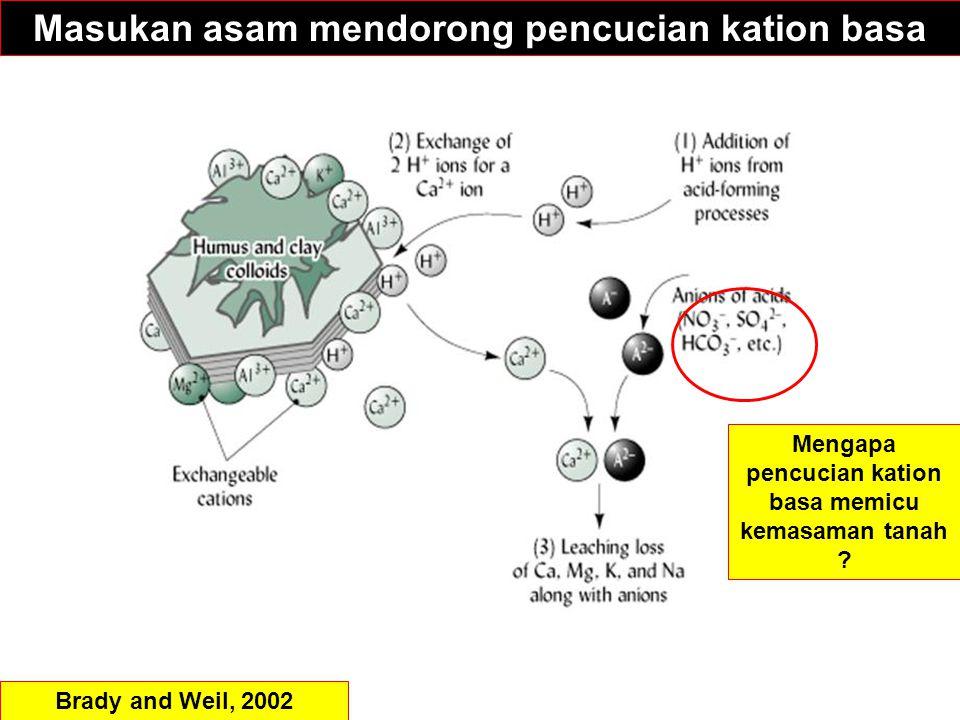 Masukan asam mendorong pencucian kation basa