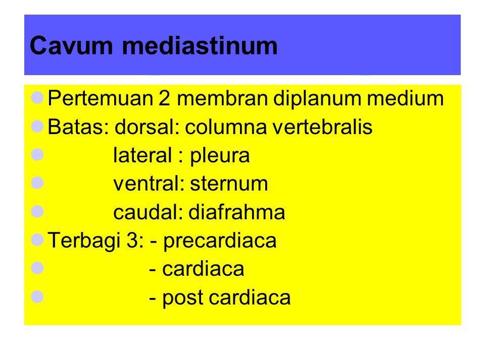 Cavum mediastinum Pertemuan 2 membran diplanum medium