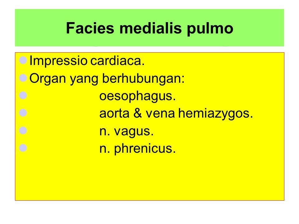Facies medialis pulmo Impressio cardiaca. Organ yang berhubungan:
