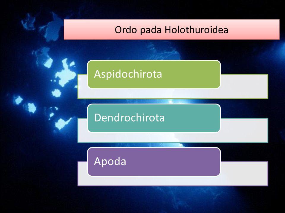 Ordo pada Holothuroidea