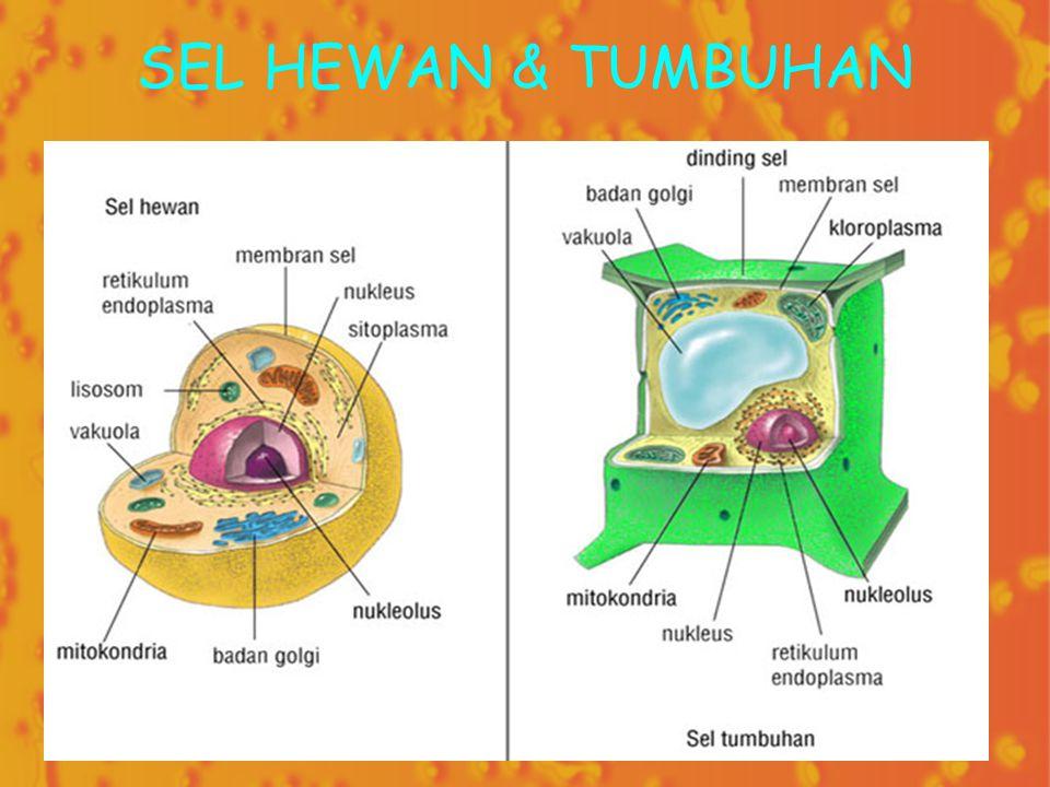 SEL HEWAN & TUMBUHAN