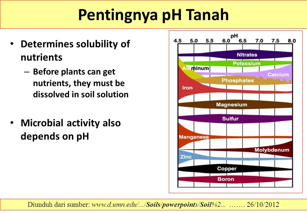 Pentingnya pH Tanah Determines solubility of nutrients