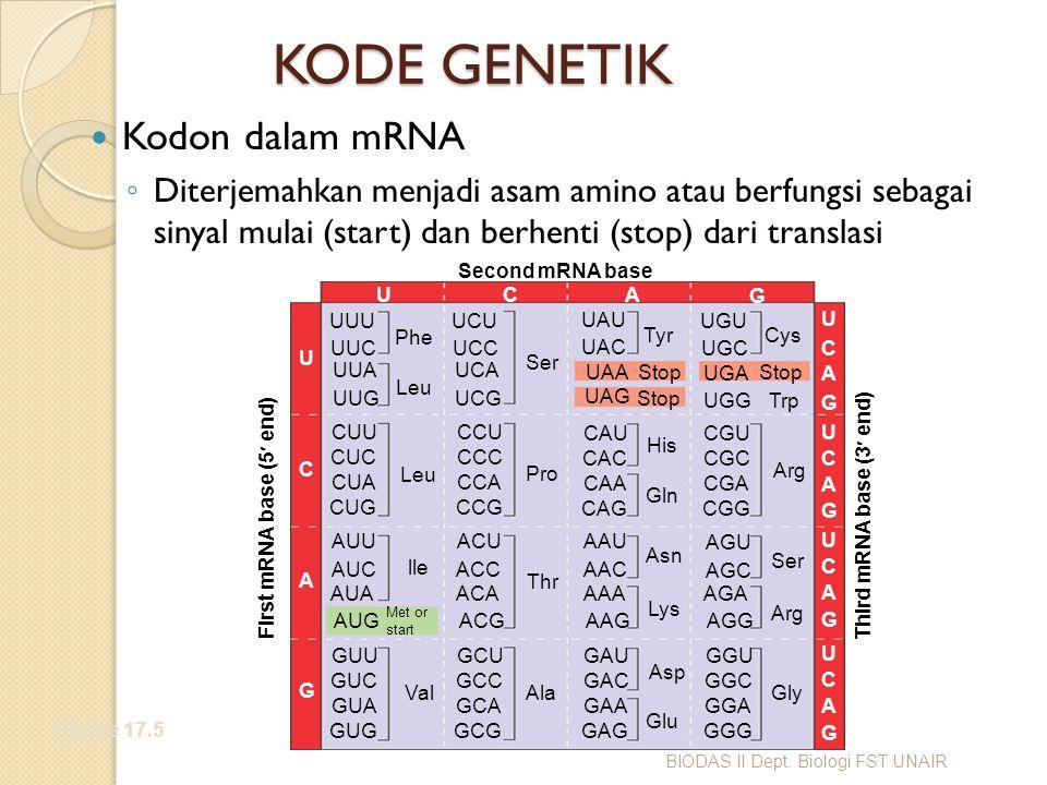KODE GENETIK Kodon dalam mRNA
