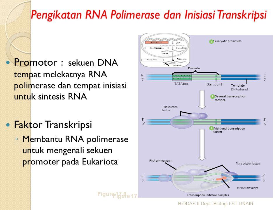 Pengikatan RNA Polimerase dan Inisiasi Transkripsi