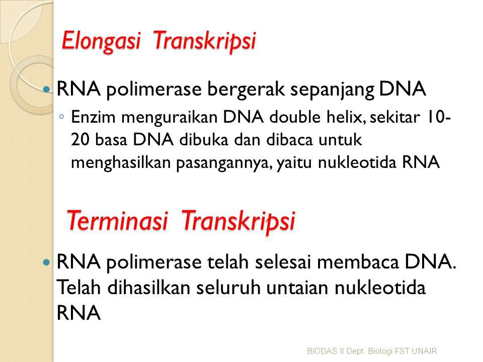 Terminasi Transkripsi